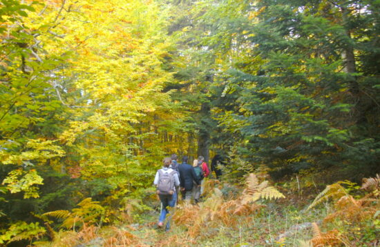 Hiking in the Paths of the northern Kissavos – Mt. Kissavos (Ossa). 896dc89bd20